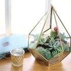 Cómo hacer un terrario con plantas suculentas. Facilísimo