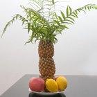 Como fazer uma palmeira decorativa usando abacaxis