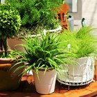 Decore o interior da sua casa com plantas