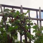 Fruit Food for Birds