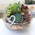 Crie seu próprio terrário de plantas suculentas