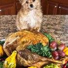 Las sobras del día de Acción de Gracias que puedes darle a tu mascota (y cuáles no)