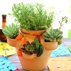 Planta un jardín de hierbas y suculentas en una maceta para fresas