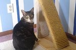 How To Make A Cat Scratching Post With Sisal Fabric Ehow