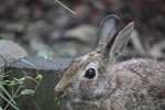 Homemade ideas to keep rabbits out of gardens ehow - How to keep deer out of garden home remedies ...