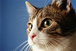 How To Remove Cat Urine From Clothes With Pictures Ehow