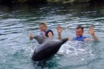 How to Swim With Dolphins on the North Island of New Zealand