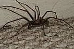 How to Rid your House of Spiders (For Good!)