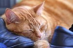 Natural Treatment for a Common Cold Infection in Cats