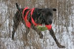 Sportdog Training Collars Instructions
