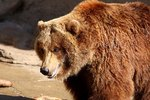 Alaska Cruises & Grizzly Bear Viewing