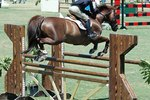 How to Build Horse Cavaletti Jumps
