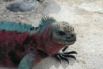 Galapagos Islands Cruise Vacations