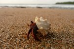 How to Keep Hermit Crabs Alive That Are from the Beach
