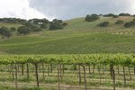 California Wine Vacations