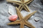 How Does a Starfish Regenerate?