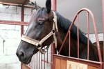 IRS Rules & Regulations for Horse Related Businesses