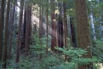 Hiking Trails in the Redwood National Park