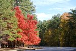 North Carolina State Parks With RV Camping