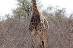 Wildlife Safari Tours at Kruger National Park