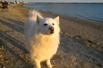 Pet-Friendly Hotels in Ocean City, MD