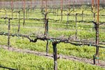 Napa Valley Limo Wine Tours