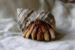 Remedies for Loneliness in a Hermit Crab