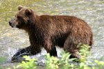 Alaska Wilderness Tours