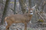Michigan Deer Hunting Regulations