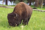 Yellowstone Travel Tips