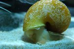 Natural Ways to Get Rid of Snails in Fish Tanks