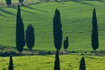 Tuscany Cooking Vacations