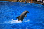The Best Time to Go to Sea World San Antonio