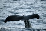New York Whale Watching Trips