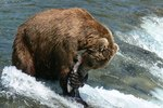When Is the Best Time for Salmon Fishing in Alaska?