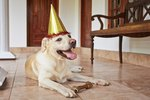 How to Host a Yappy Hour