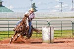 Tips on Training Barrel Racing Horses
