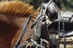 What Type of Saddle for a High-Withered Horse?