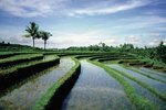 Honeymoons to Bali, Indonesia