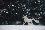 The 10 Most Beautiful Horse Breeds