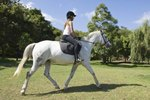 How to Train a Horse With Draw Reins