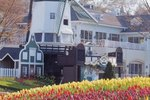 Spring Garden Tours in Holland