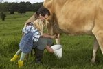 How to Milk a Cow Step-by-Step