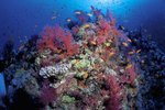 The Disadvantages of Artificial Coral Reefs