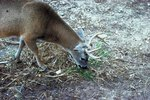 What Times Do Deer Feed?