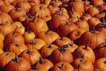 The World's Largest Pumpkin Festival in Germany