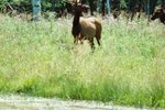What States Have Elk?