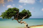 All-Inclusive Adults-Only Travel in Aruba