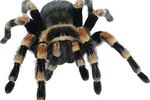 What Kinds of Spiders Have Two White Spots on Their Back?