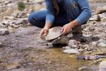 Gold Panning Locations in Idaho